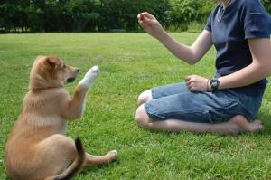 Дресиране на куче