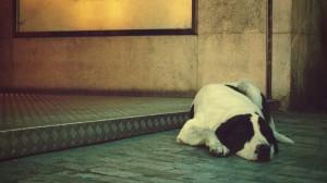 Куче спи на двор