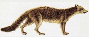 Първото куче - Hespercyon