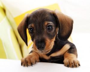 Отглеждане на малко кученце