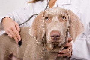 Психология на кучето