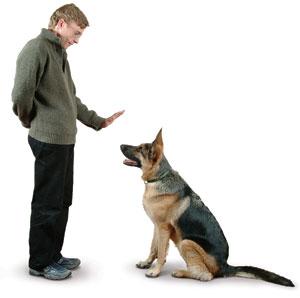 Дресиране на кучето