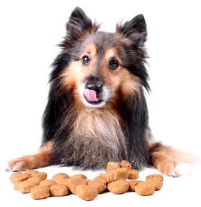 Как да храним кучето си