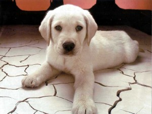 Домашно куче