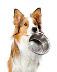 Съдове за храна за куче