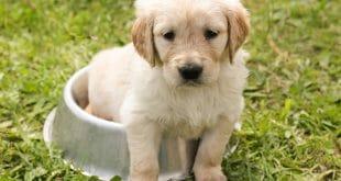Как да изградим хигиенни навици на кученцето