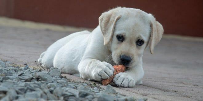 Правилно хранене на кучето