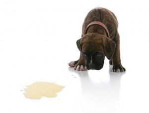 Хигиенни навици в малкото кучнеце