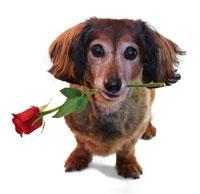 Влюбено куче