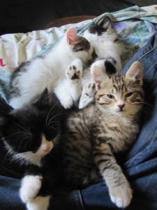 Раждане и бременостт при котките