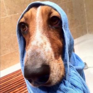 Подсушаване на кучето