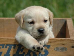 Отглеждането на малко кученце