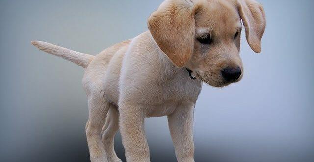 грижи за малкото кученце