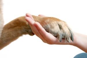 Изрязване на ноктите на кучето