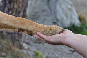 Как да изрежем ноктите на куче?