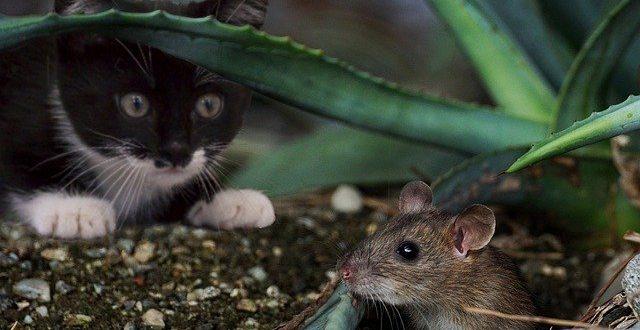 лов при котките