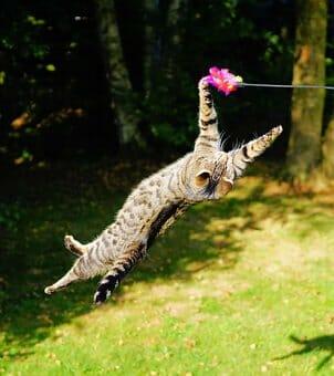 Играчка за котка