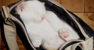 пътуване с котка