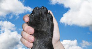 Рязане на нокти на кучето