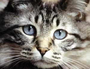 Отделителната система при котката