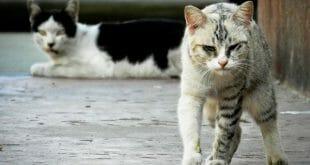 бездомните котки
