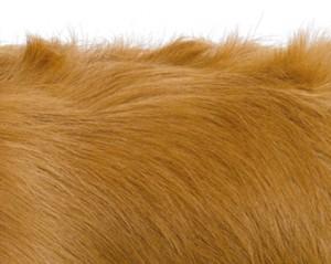 Смяна на косъма при кучетата
