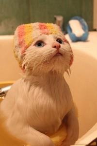 Къпане на котката