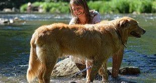 грижи за козината на кучето