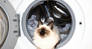 Как се къпе котка