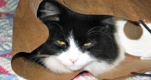 Котката и тоалетната хартия
