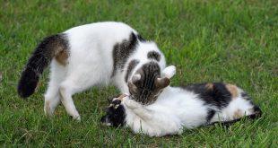 котки любов