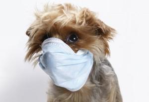 Болести при кучетата