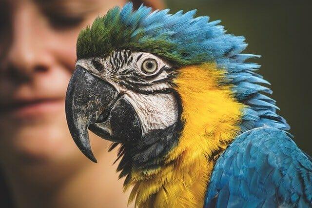 Папагал ара