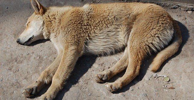 Болести донасяни от куче