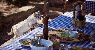 Какво не трябва да яде котката