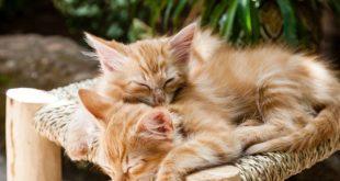 най-разпространените имена на котки
