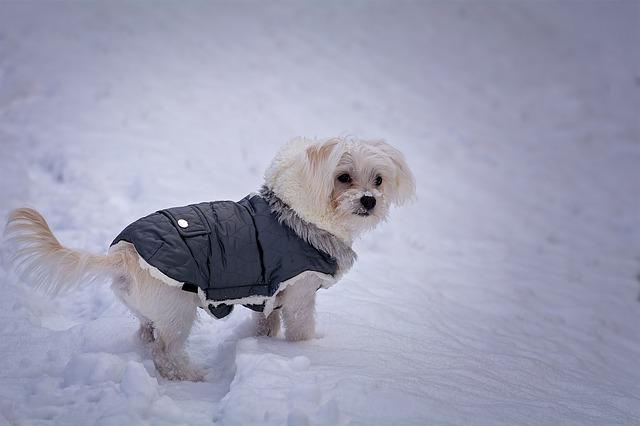 куче с яке