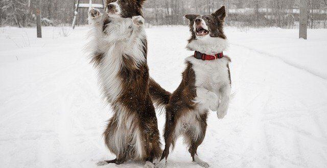 кучето през зимата